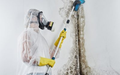 Why Should You Have Mold Testing