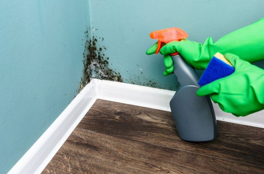 How To Find The Best Black Mold Removal Service