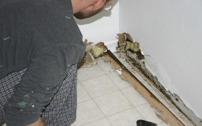 Home Health With Mold Remediation – How Is it Important to You