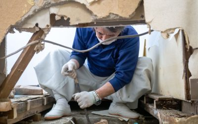 Home Mold Inspection – Providing Safe Air Quality With Professional Help