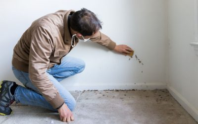 Home Mold Inspection For Your Safety
